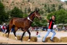 4 داور خارجی اسب های اصیل ترکمن را قضاوت می کنند