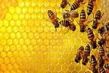 تلفات زنبورها در برخی کندوهای خراسان رضوی
