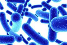 بیماری وبا در 75 درصد موارد بدون علامت است