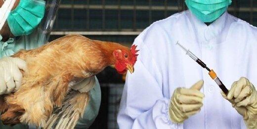 آنفلوآنزای فوقحاد پرندگان در کردستان شیوع ندارد