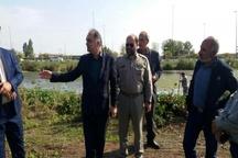 جمع آوری سریع گیاه مهاجم سنبل آبی از سطح منابع آبی آستارا