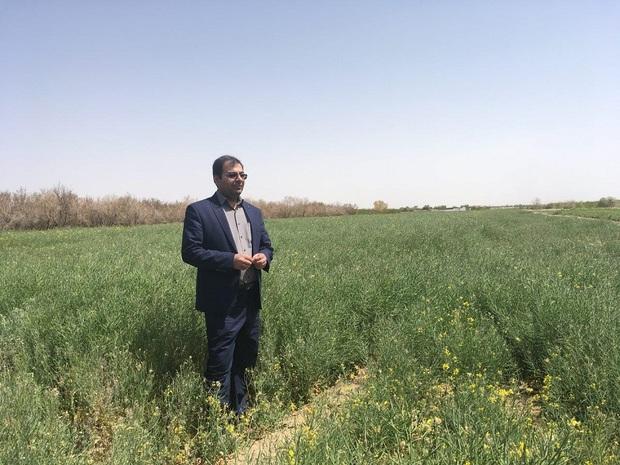 خرید تضمینی گندم از کشاورزان یزدی در دستور کار است
