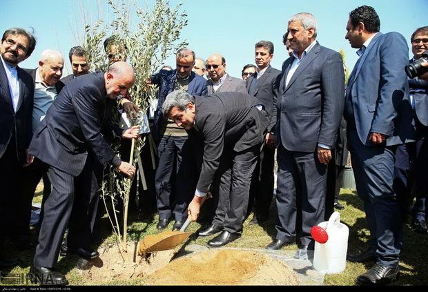درخت صلح و دوستی در پایتخت ایران کاشته شد