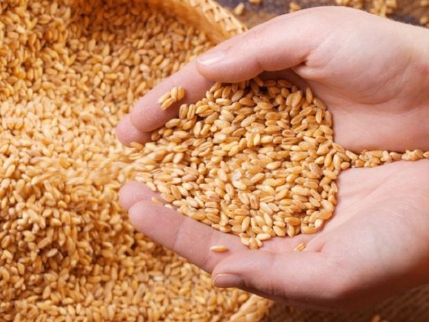 پرداخت زکات کشاورزان بیجاری 50 درصد افزایش یافت