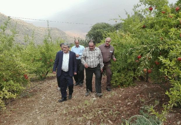باغات مدرن ورمنجه کرمانشاه در سطح کشور نمونه است