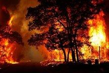 قصه پرغصه آتش سوزی در ارزشمندترین جنگل های ایران
