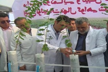 نخستین تولیدات نهال گواهی شده در کشور رونمایی شد