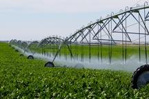 اجرای آبیاری تحت فشار سطح زیر کشت اراضی کشاورزی ورامین را افزایش داده است