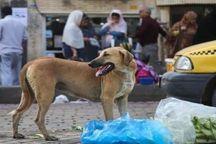 شهرداری یزد برای سگهای بدون صاحب مکان ویژه ایجاد میکند