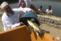 چابهار وکنارک رتبه اول صید ماهی ومیگو در غرب اقیانوس هند را دارند