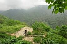 گلستان و پارکهای جنگلی