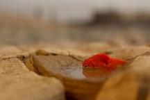 شوشان: پازل بحران های خوزستان