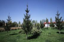 60 هزار هکتار فضای سبز جدید در استان تهران ایجاد می شود