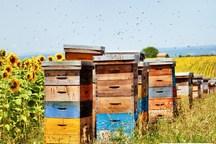 آمار کندوهای عسل تایباد 80 درصد افزایش یافت