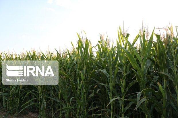 تولید سالانه ۲۰ میلیون تن محصولات علوفهای در کشور