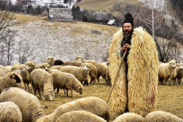 عکس روز نشنال جئوگرافیک؛ چوپانی در کنار گوسفندانش