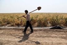 قطع برق، کشاورزی فارس را به مخاطره انداخته است