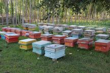 900 تن عسل در خلخال تولید می شود