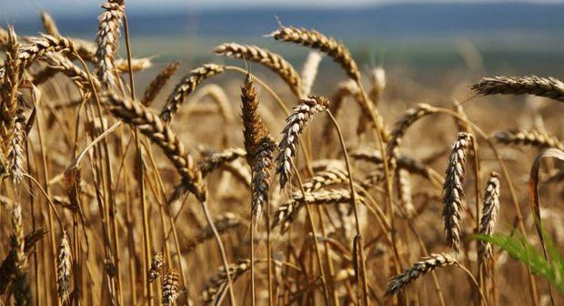 بیشترین عملکرد تولیدات کشاورزی در کشور متعلق به البرز است