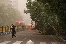 پیش بینی وزش باد شدید در پایتخت
