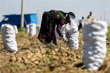 یزد، رتبه نخست پرداخت تسهیلات اشتغال روستایی کشور را داراست