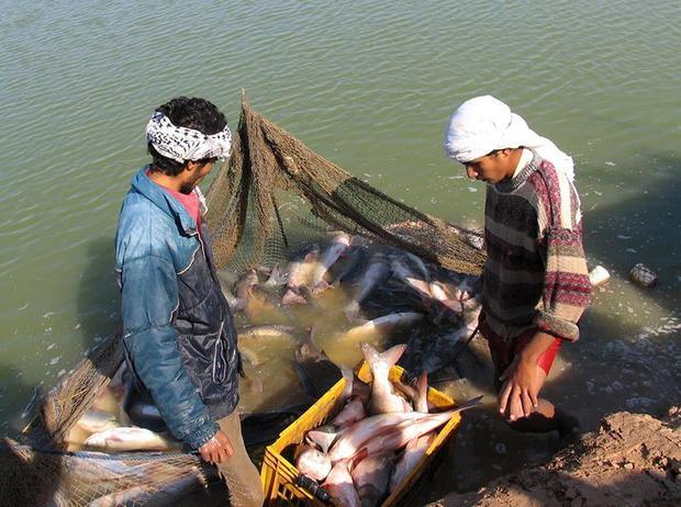 29 هزار قطعه بچه ماهی در  درمیان پرورش یافت