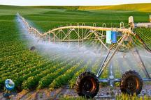 رونق کشت گیاهان کم آبخواه گامی به سوی کشاورزی نوین در بافق