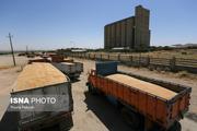 خرید گندم در همدان از مرز 347 هزار تن گذشت