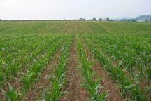 عضوگیری از صندوق توسعه کشاورزی باشت آغاز شد