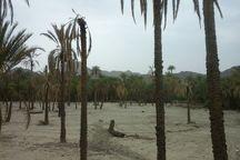 طرح آبیاری نوین راه حل مشکل خشکسالی در خاش