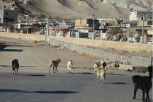 سگ های ولگرد پایتخت در حسن آباد رها می شوند