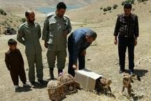 8 بال کبک و سارگپه در مهاباد رها شدند