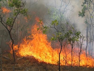 مهار آتش سوزی جنگل های بویراحمد