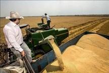 محلات صدرنشین تولید گندم با کیفیت در استان مرکزی