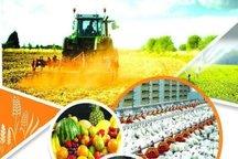 207 طرح کشاورزی در قزوین تسهیلات اشتغال روستایی دریافت کردند