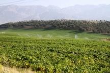 اجرای بیش از 300 طرح شبکه آبیاری کشاورزی در کهگیلویه و بویراحمد