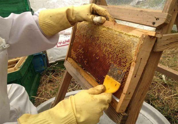تولید عسل در سیستان و بلوچستان ۱۴درصد افزایش یافت