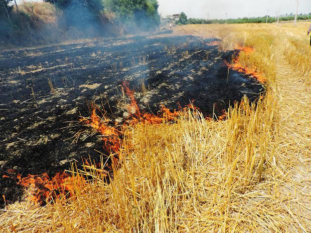 کشاورزی حین آتش زدن کاه و کلش مزرعه دستگیر شد