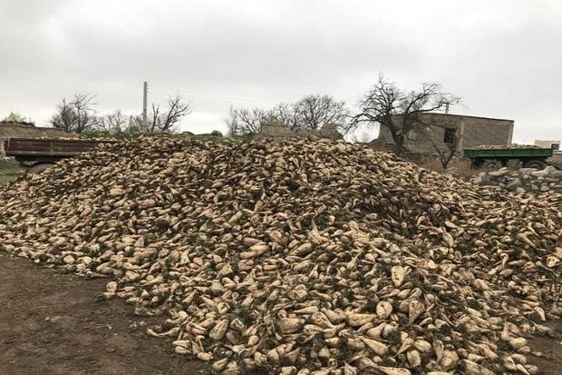 هزار هکتار از اراضی اردبیل زیرکشت چغندر قند می رود