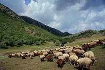 60درصد دامداری آذربایجانشرقی درحوضه دریاچه ارومیه متمرکز است