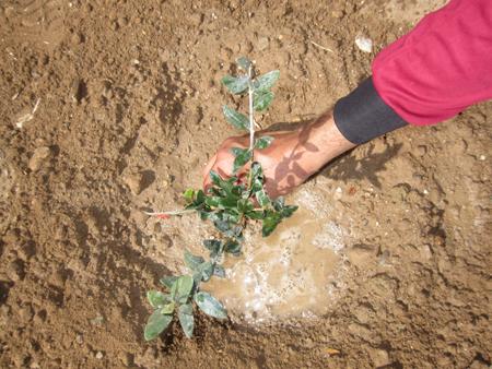 آغاز کاشت بیش از 100 هزار اصله نهال در کرج