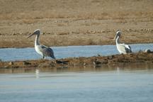 18 گونه جانوری جدید در نیشابور ثبت شد