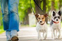 فرماندار: با سگگردانی در هشترود برخورد میشود