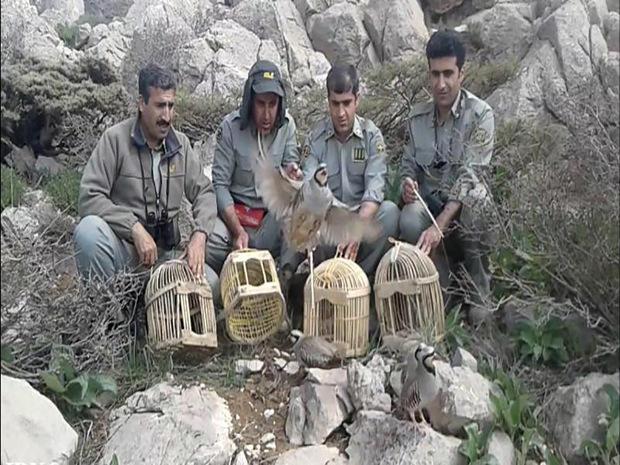 چهار کبک در منطقه حفاظت شده سروآباد رهاسازی شد