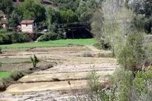 امسال بخش کشاورزی کردستان 403 میلیارد تومان خسارت دید