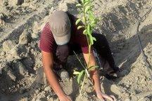 مسئول واحد آلاینده محیط زیست در شهرضا به کاشت نهال محکوم شد