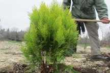 یک آلوده کننده محیط زیست در تاکستان به کاشت سه هزار هکتار درخت محکوم شد