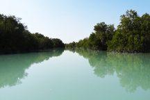 بکارگیری تجارب جهانی حفظ جنگل های حرا در بوشهر ضروری است