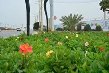 100هزار نشا انواع گل های فصلی و دائمی در بوشهر کشت شد
