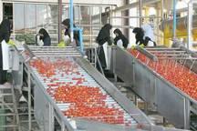 پروانه فرآوری 27هزارتن محصول کشاورزی گلستان صادر شد